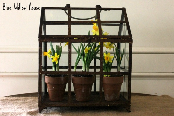 BlueWillowHouse-Tete-Daffodils-7
