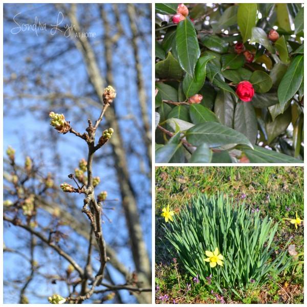 On-the-Farm-Spring- Sondra-Lyn-at-Home