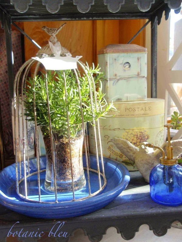 BotanicBleu-Bottom shelf birdcage rosemary