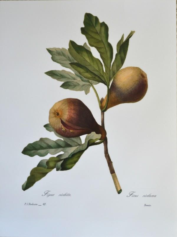 Fig- Zazzle