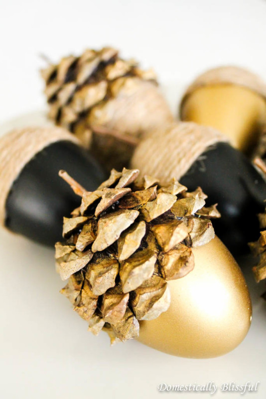 gold-acorns-domestically-blissful